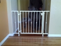 custom-iron-gates-47